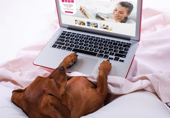 Hund surft mit Laptop im Internet